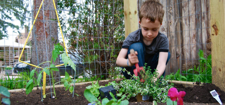 10 Ways to Keep Your Garden Healthy